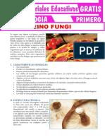 Reino-Fungi-para-Primero-Grado-de-Secundaria