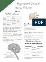 Divisões e Organizações Gerais do Sistema Nervoso