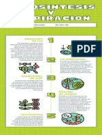 Green Lined Photosynthesis Biology Infographic  (1)