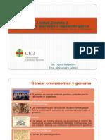 Tema 1- Estructura de los ácidos nucleicos