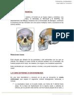 1. Anatomía Frontal