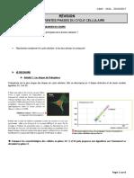 Les_differentes_phases_du_cycle_cellulaire