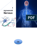 Révision Système Nerveux(1)