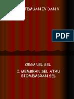 Pertemuan IV Dan v Organel Sel Biomembran Atau Membran Sel