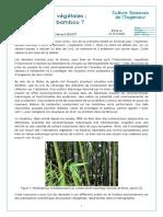 jujubambou12022-constructions-vegetales-ca-tient-le-bambou-ensps