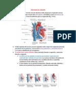 Anatomía de corazón-Moore (1)