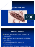 Mycobacterium