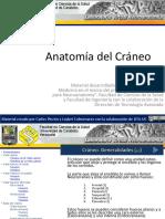 anatomadelcrneoslideshareweb-120317035905-phpapp02