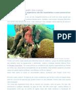 Mergulho no mundo dos corais