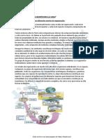 Resumen-Biologia445