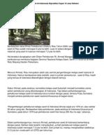 2014-perkebunan-kelapa-sawit-di-indonesia-diprediksi-capai-10-juta-hektar