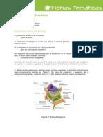 Actividad_Estudiante-La_celula_organelos_celulares
