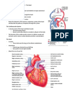 Handouts_Cardiovascular_Sys_Sp11