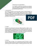 Tipos de Células y Sus Características