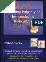 ANATOMÍA PULPAR Y DE LOS CONDUCTOS RADICULARES