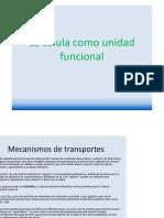 La_celula_como_unidad_funcional