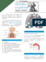 Anatomia do sistema respiratório no período neonatal COANATO