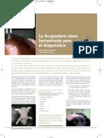 acupuntura_veterinaria