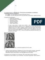traumatologia-toracica-lembo-costale-mobile