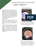 informe microbiologia