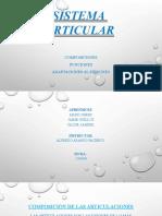 Diapositivas sistema articular