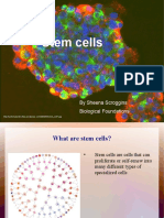 Stem Cell Project