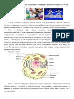 Развитие физических качеств на занятиях физической культурой-3