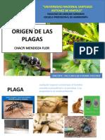 origen de las plagas