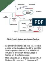 rutas de pentosas fosfato