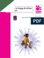 Advances in Puppy & Kitten