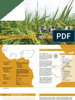 AfricaRice Annual Report 2005-2006