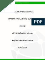 HHerrera_Reporte de núcleo celular