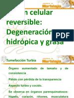 04 Lesión Celular Reversible Degeneración Hidrópica y Grasa