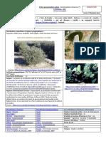 fiche-presentation-Simmondsia-chinensis