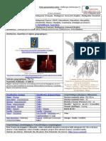 Fiche-presentation-Dalbergia-trichocarpa