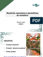 Baterioses Vasculares Plantas