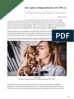 canaldopet.ig.com.br-O que fazer quando o gato é diagnosticado com FIV ou FeLV