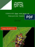 9 HEMIPTERA
