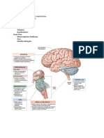 Brain Parts I and II Handouts Sp11