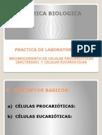 Practica 07 Reconocimiento Celulas Procariotas y Eucariotas