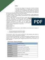 Entomologia - Clasificación taxonómica de los insectos (C)
