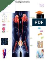 Esquema-Fisiopatologia-IU