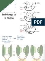 embriologa-del-aparato-reproductor-femenino
