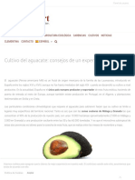 Cultivo aguacate consejos