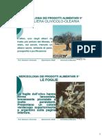 La Filiera Olivicolo-olearia