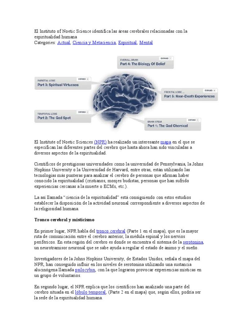 donde+se+encuentra+la+serotonina+en+el+cerebro