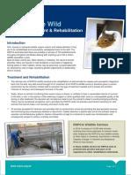 Back to the wild factsheet (PDF 308KB)