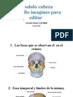 Cabeza y cuello anatomia 1