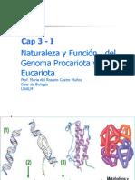 Cap 3 -1 Material Hereditario (1)
