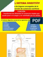 diapositivasdelsistemadigestivo-jlo-2010-121107190747-phpapp02